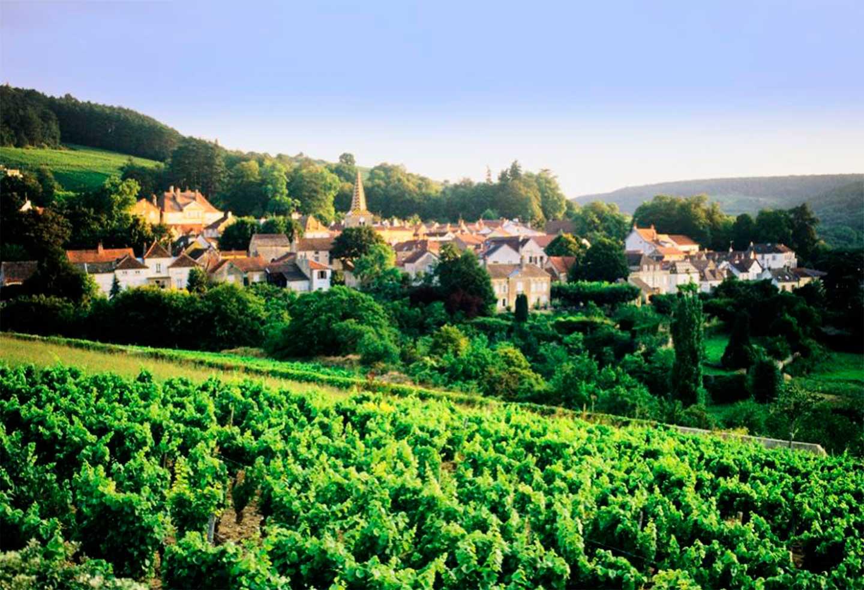 Degustace burgundských vín